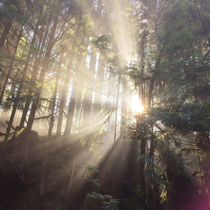 Dreamy sun rays through Lynn Valley Canyon