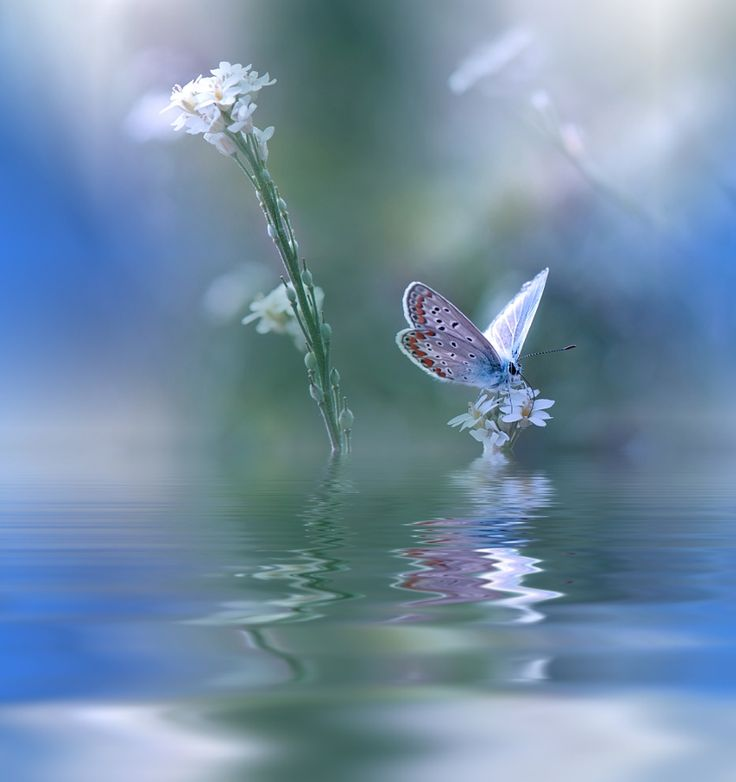 ~~`'`~~ by Juliana Nan - Photo 150309905 / 500px