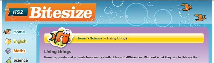 Humans, plants and animals have many similarities and differences. Find out what they are in this section.