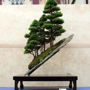 Bonsai by renan.macedo.10441