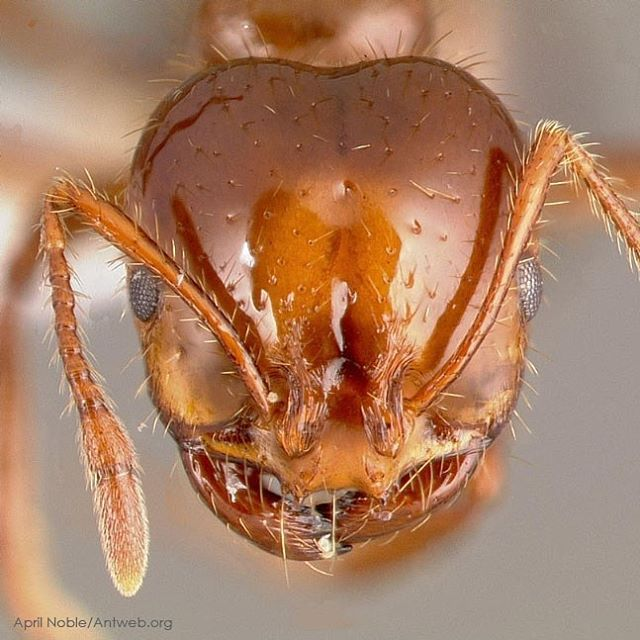 the concerns in the us over the harmful pest fire ants Fire ants other services about us the dangers of common pest control the unfortunate truth is that most pest control companies use dangerous chemicals when.