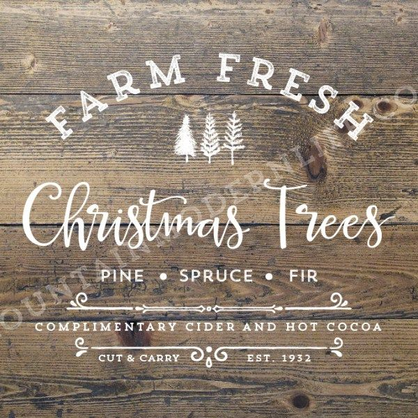 Best 25+ Fresh christmas trees ideas on Pinterest | Mini christmas ...