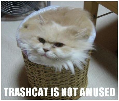 trash cat ha ha