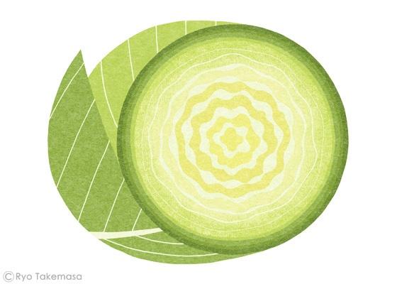 cabbage / Ryo Takemasa