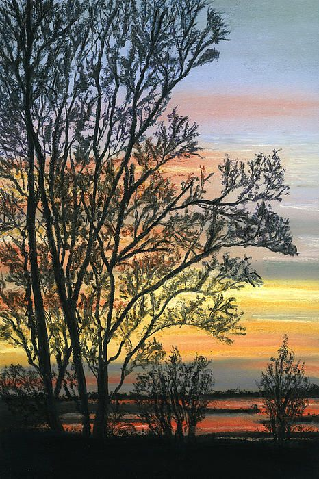 """Tree Silhouette at Sunset. From a photograph by Paul Sherman. Soft Pastels on Art Spectrum Colourfix pastel paper. Size 7½""""x11½"""" Fine Art Prints and Greeting Cards from Fine Art America."""
