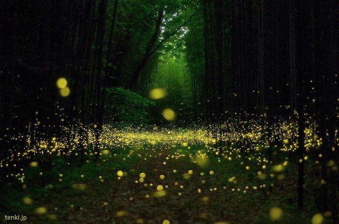 Luciérnagas En Japón Lugares Para Verlas En Verano Japón Secreto Luciernagas Bosque De Noche Paisajes