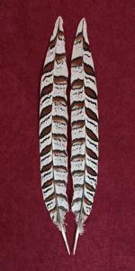 Atlantic Salmon Fly Tying Materials   Classic Salmon Fly Tying Materials   Rare and Exotic Feathers