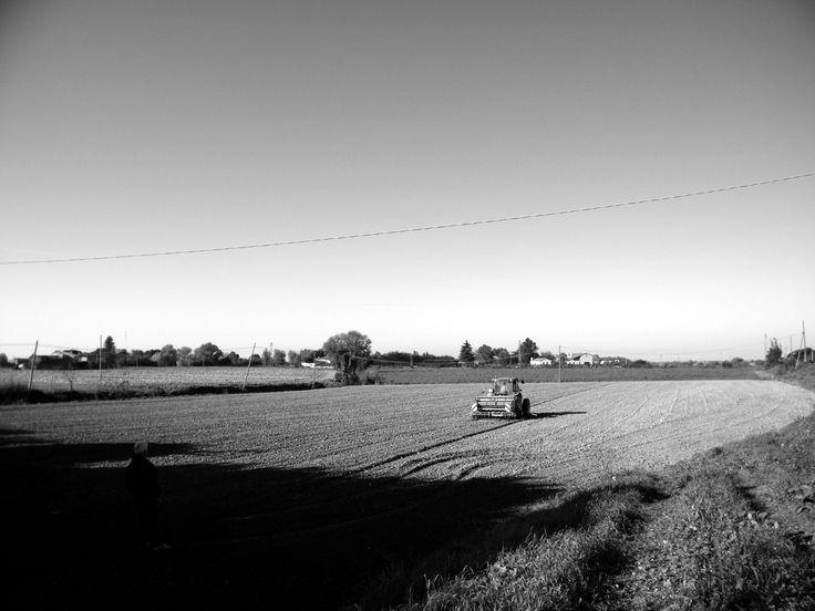 Polesine, Ottobre 2014 (2)