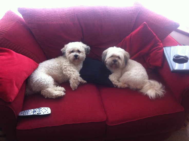 Cookie and Barney