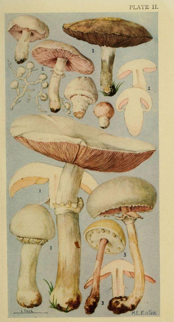 :: botanical print :: mushrooms by mmanuella
