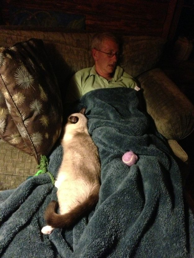 After his wife died, his cat wouldn't leave his side. | 37 Pictures That Prove Cats Have Hearts Of Gold