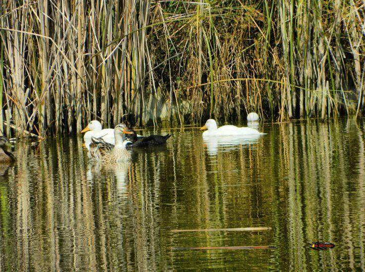 Lake Palacongressi di Rimini, Emilia-Romagna, Italy, Nikon Coolpix L310, 94.5mm, 1/500s, ISO 80, f/5.8, -07ev, HDR phortography, 201707131043