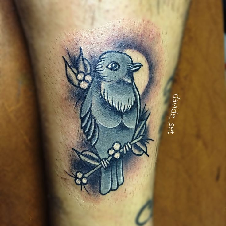 Little bird by Davide Set from Italy