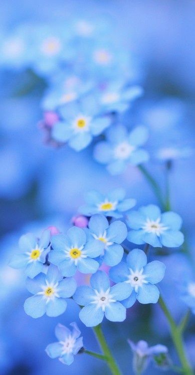 Happy Blue • photo: *Sakura* on Flickr: