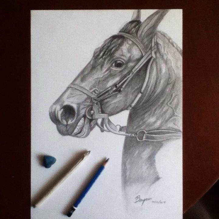Horse -caballo