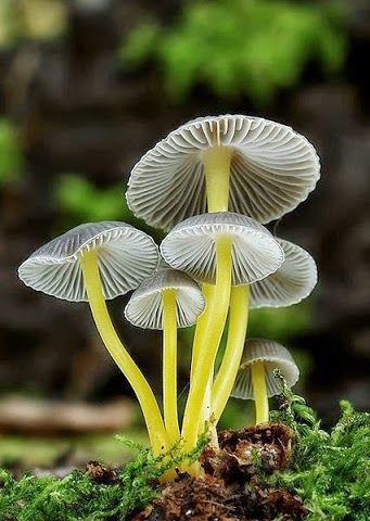 #Mushroom Just lovely!!!!!!!!!!!!!!!