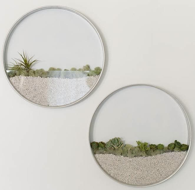 circular terrariums hanging on the wall