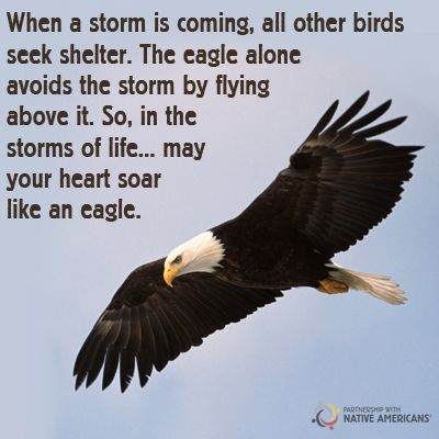 Photo: May you soar like an eagle today!  Partnership With Native Americans Google+ #native #proverb