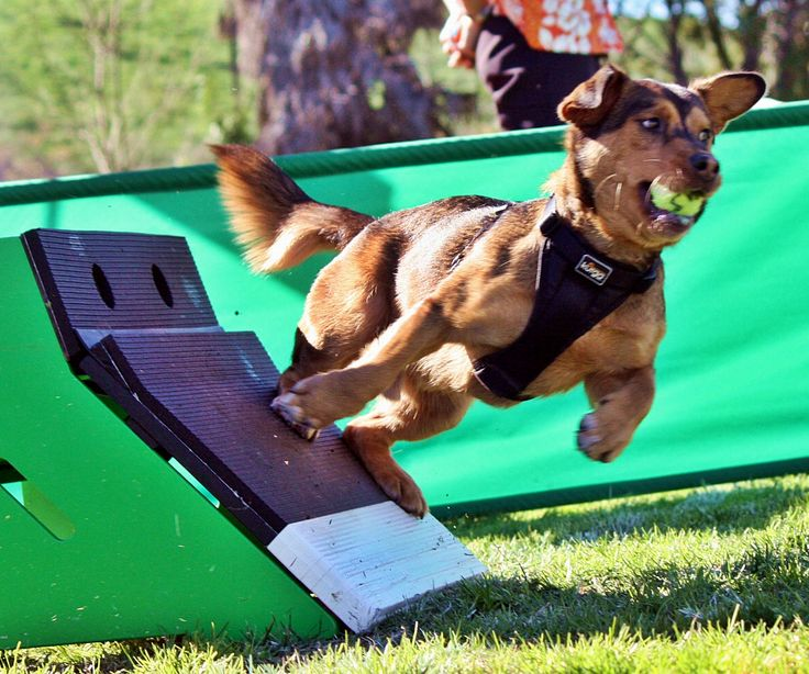 My Life With Flyball Dogs- A fun dog blog about an owner and her two dogs, who train and compete in flyball, lure coursing, and dock diving while having fun