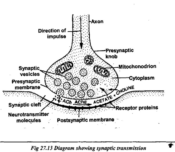 best 25  neuron diagram ideas on pinterest