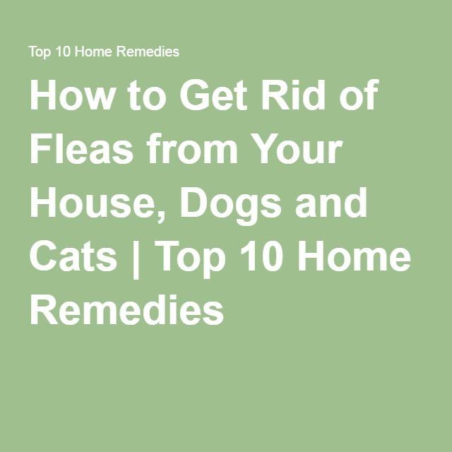 25 Best Ideas About Home Remedies Fleas On Pinterest