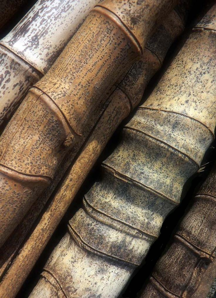 'Old Bamboo'   ©Zsaj, via flickr