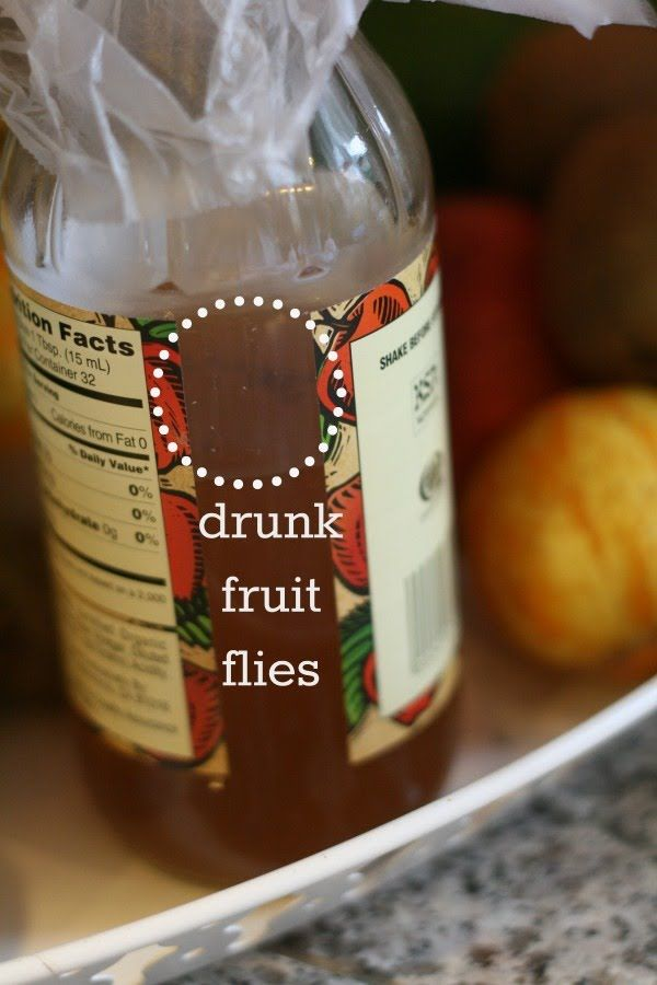 How To Get Rid Of Fruit Flies (With Images)