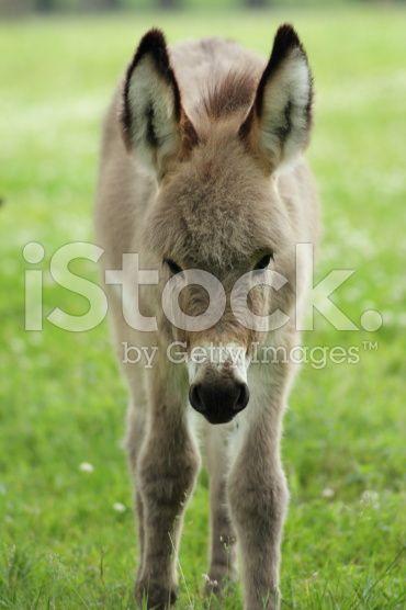 Donkey – lizenzfreie Stock-Fotografie