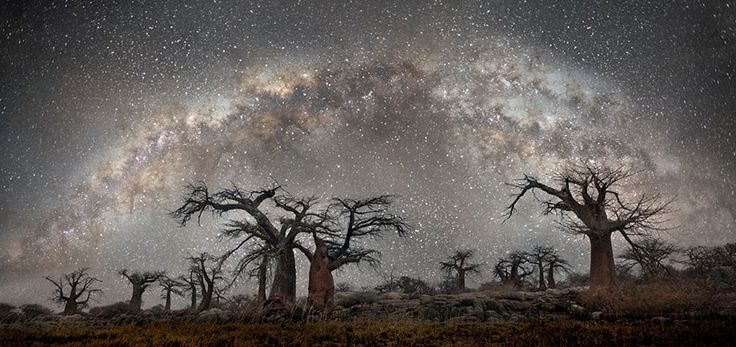 """Ancient trees affected by cosmic rays are the subject of The """"Diamond Nights"""" project by San Francisco-based photographer Beth Moon. Moon has spent the last 14 years photographing the world's oldest trees in daylight, but this series captures them at night. Her photos feature primarily baobab and quiver trees in South Africa, Botswana, and Namibia."""
