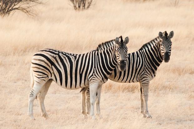 SA Kruger Blog