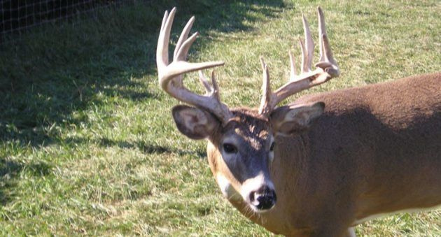 CWD Found in a Wild Texas Deer for the First Time Ever