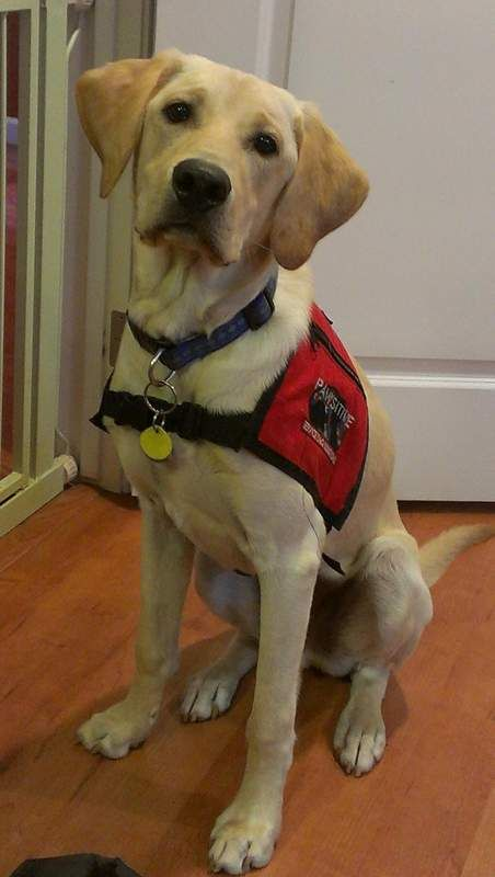 Autism Service Dogs are heroes.