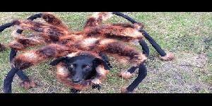 Mutant Spider-Dog funny prank