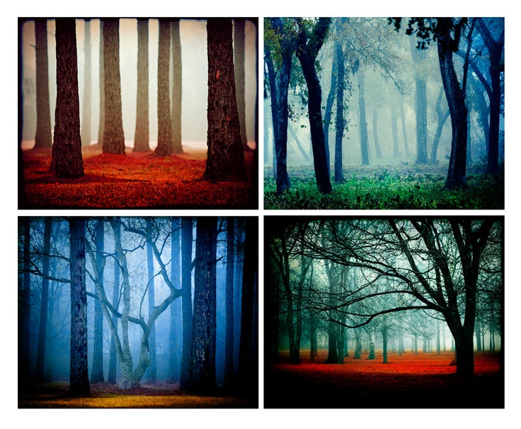 Fairytale Collection II - woods trees fog fairytale red forest - decorative photography prints. $75.00, via Etsy.