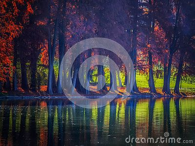 overfiltered artistic autumn mist with trees on water`s edge