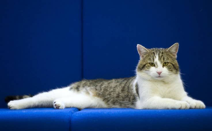 The Life And Times Of Larry The Downing Street Cat Cats Cat Work Cat Adoption