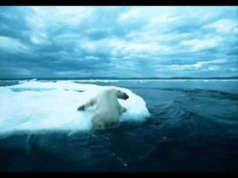 The effects of global warming. #Animals, #Bears, #Capes, #Dying, #Endangered, #Fire, #Global, #Heat, #Hurt, #Ice, #Mealting, #Over, #Polar, #Species, #Taking, #Warming, #Wild, #World #GlobalWarmingVideo Read the rest of this entry » http://whatcausesglobalwarming.net/global-warming-video/the-effects-of-global-warming-2/