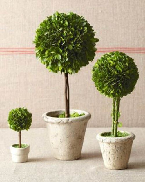 Topiary centerpieces - should store well and have great versatility for dressing up