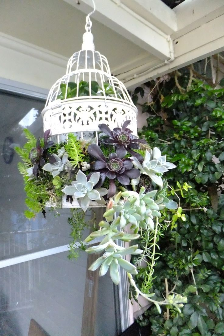 white painted birdcage filled with succulents
