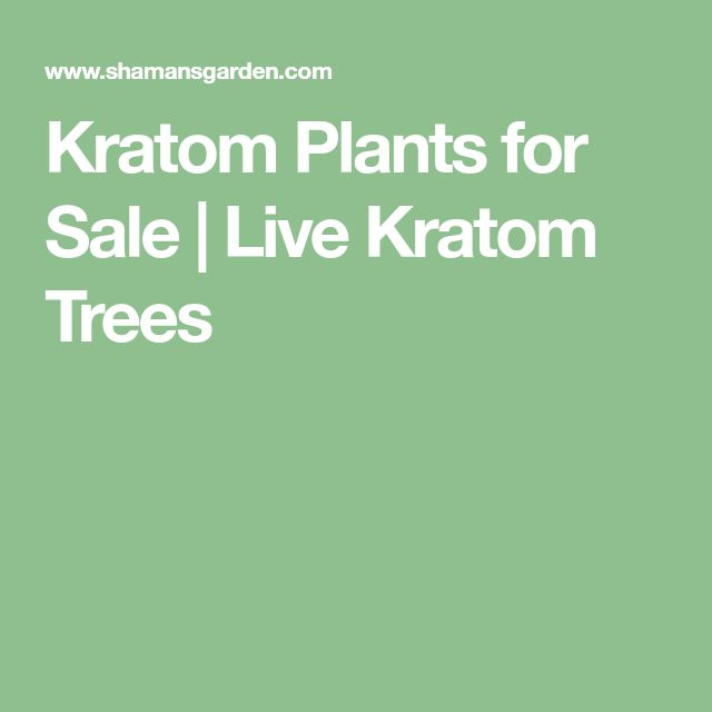 Kratom Plants for Sale | Live Kratom Trees