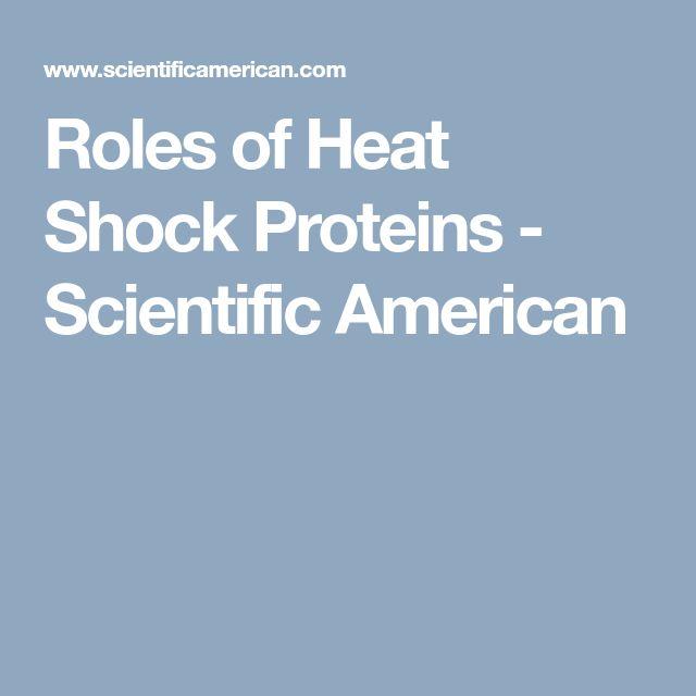 Roles of Heat Shock Proteins - Scientific American