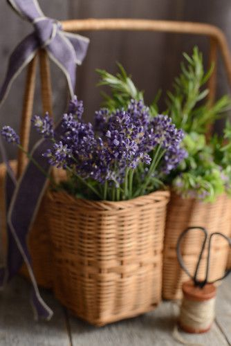 花のある暮らし の画像|サブリナ~花と写真のある暮らし~