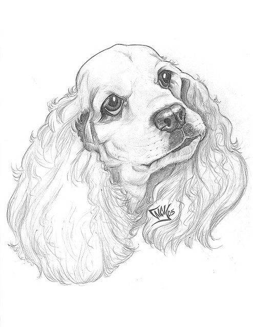 56 best cocker spaniel art images on pinterest for English springer spaniel coloring pages
