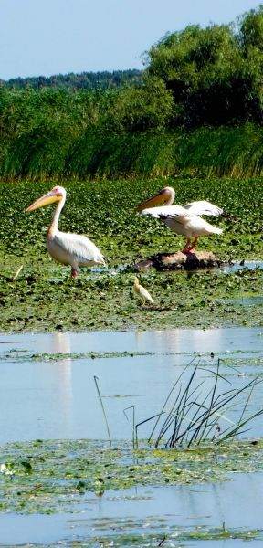 The Danube Delta is the second largest river delta in Europe, after Volga Delta, and is the best preserved on the continent. The greater part of the Danube Delta lies in Romania. | Discover Amazing Romania through 44 Spectacular Photos
