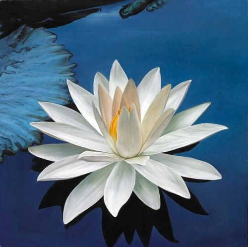 .Ponds, Water Plants, Waterlily, Paths, Mud, Lotus Flowers, Tropical Flower, Daisies, Water Lilies