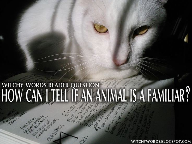 Witchy Words: Reader Question: How can I tell if an animal is a familiar?