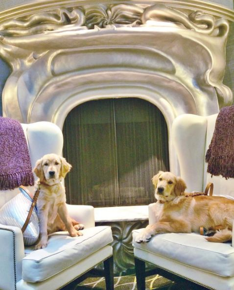 Galleria Park Is An Amazing Pet Friendly Hotel In San Francisco Just Ask These