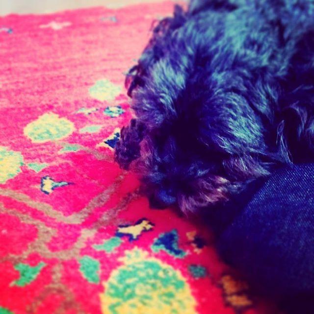 寝てる。 #そら#犬#愛犬#といぷー#黒#black#sleeping#映画みてるなう#くれよんしんちゃん#ほこたて#なつい#love#like#follow
