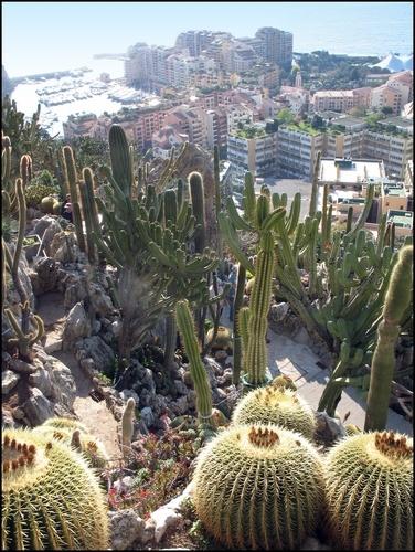 1000 images about sud eden de provence on pinterest for Jardin exotique monaco