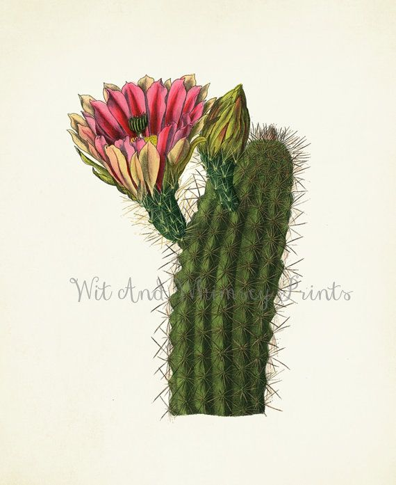 Vintage CACTUS IV Archival Print 8x10 Wall by WitAndWhimseyPrints, $10.00